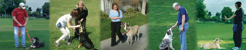 Training Services                                       | Lee Ann Svoboda, Luck Be A Lady Dog Training Fort Pierce FL